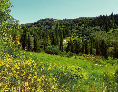valleydancingtreefarm